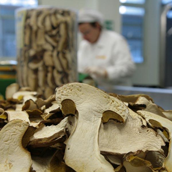 produzione funghi filotei group